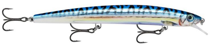 (SBML) Live Blue Mackerel