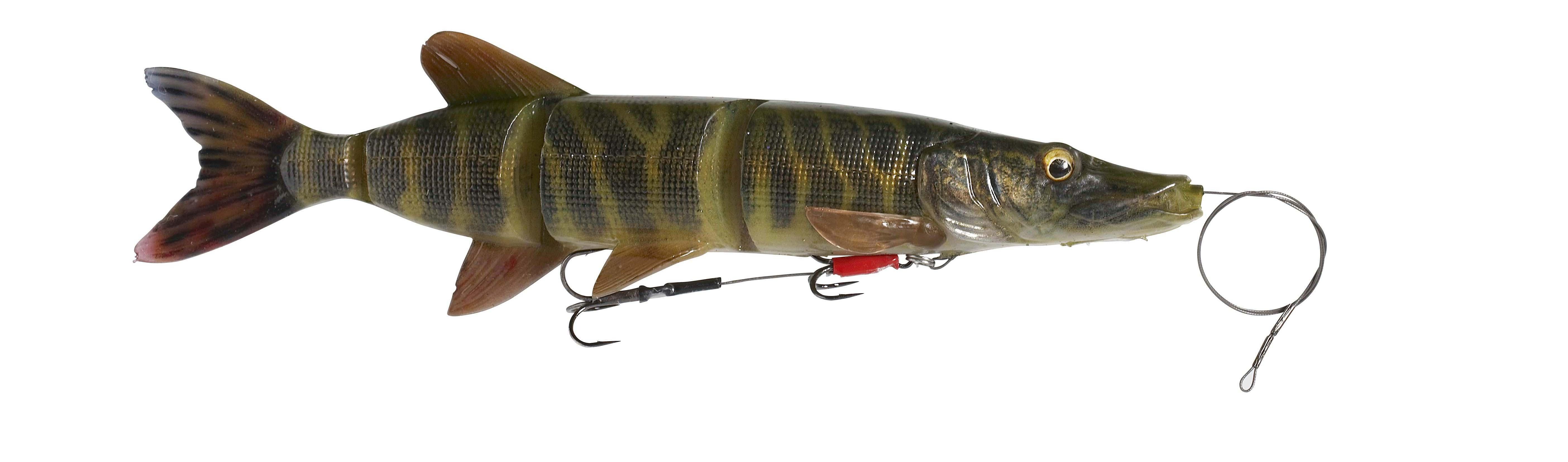 Striped Pike