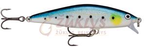 (BSRD) Blue Sardine